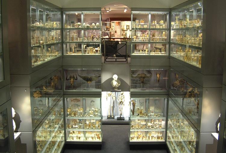 Museum Studies most academic colleges